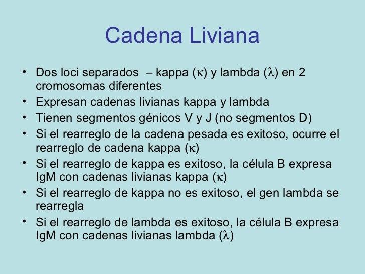 REARREGLOS DE GENES kAPPA