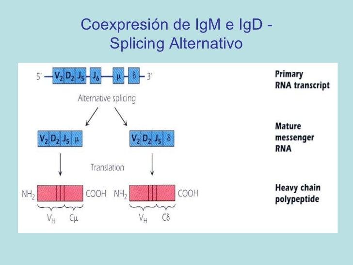 Mecanismos de DiversidadCada individuo puede producir células B y T con 1015 a 1018  diferentes especificidades.Tenemos an...