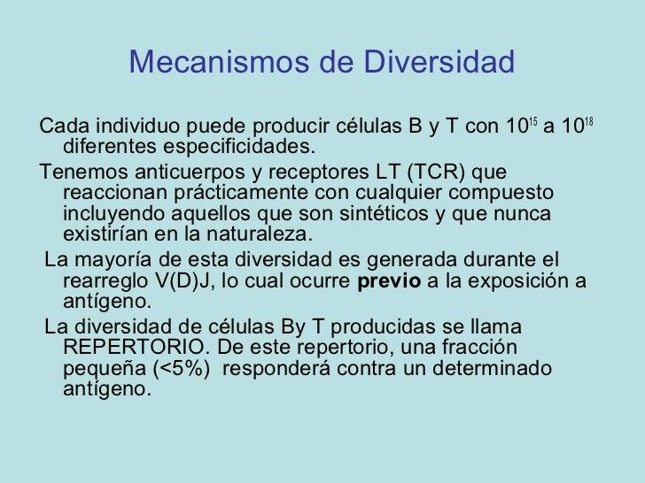 Mecanismos de Diversidad de Anticuerpos• Disponibilidad de múltiples segmentos  génicos V.• Diversidad combinatorial: dife...