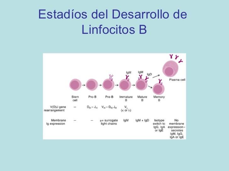 Ontogenia de Linfocitos T