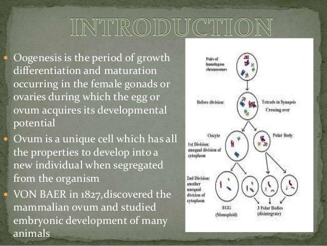 Oogenesis Slide 2