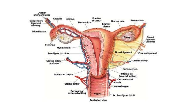 human gonadotropin injection
