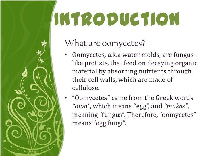 oomycetes
