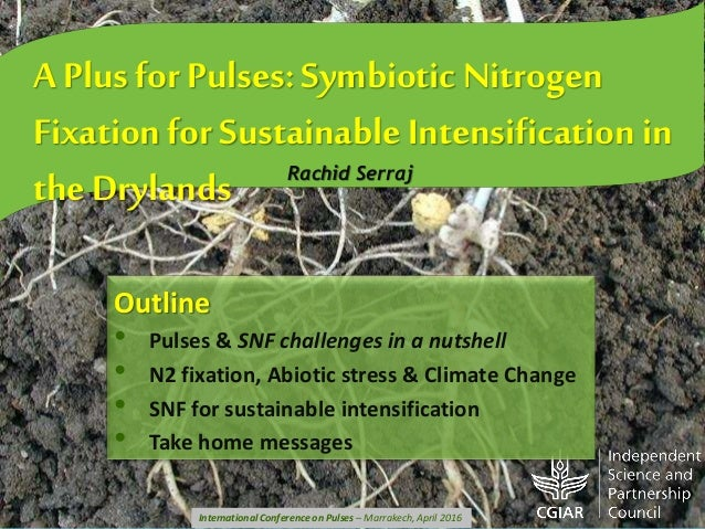 A Plus for Pulses: Symbiotic Nitrogen Fixation for Sustainable Intensification in the Drylands Rachid Serraj Outline • Pul...