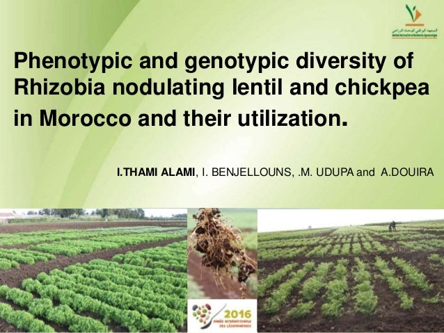 Phenotypic and genotypic diversity of Rhizobia nodulating lentil and chickpea in Morocco and their utilization. I.THAMI AL...
