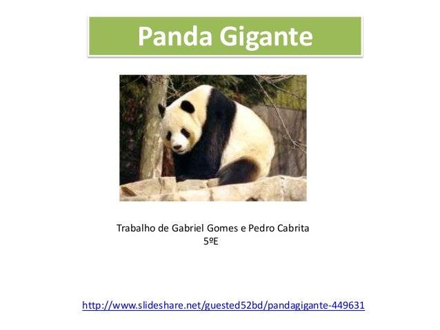 Panda Gigante  Trabalho de Gabriel Gomes e Pedro Cabrita 5ºE  http://www.slideshare.net/guested52bd/pandagigante-449631