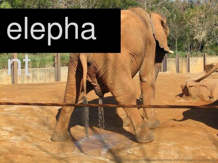 elephant<br />http://www.flickr.com/photos/flisspix/335663918/ elephant pissing by mygothlaundry<br />