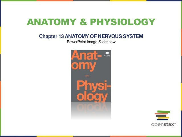 Open stax anatomy& physiology ch13