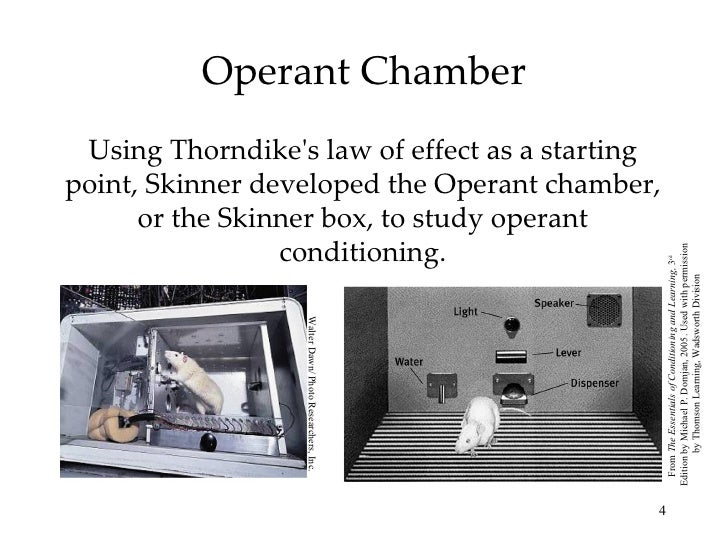 Differences Between Classical vs Operant Conditioning ...