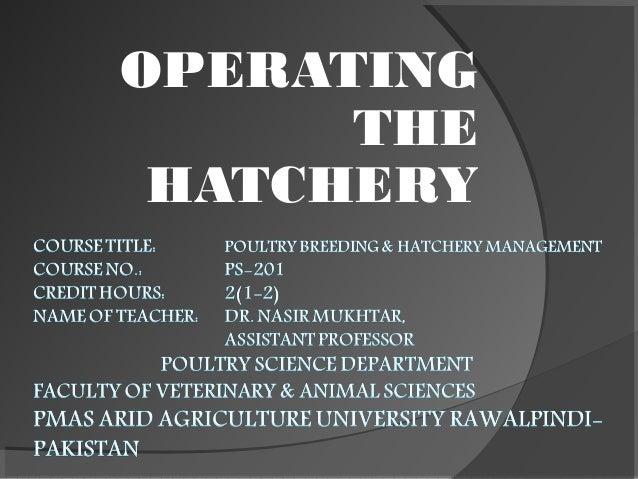 OPERATING THE HATCHERY