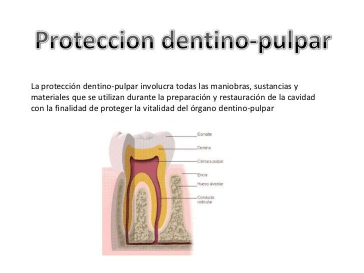 La protección dentino-pulpar involucra todas las maniobras, sustancias ymateriales que se utilizan durante la preparación ...