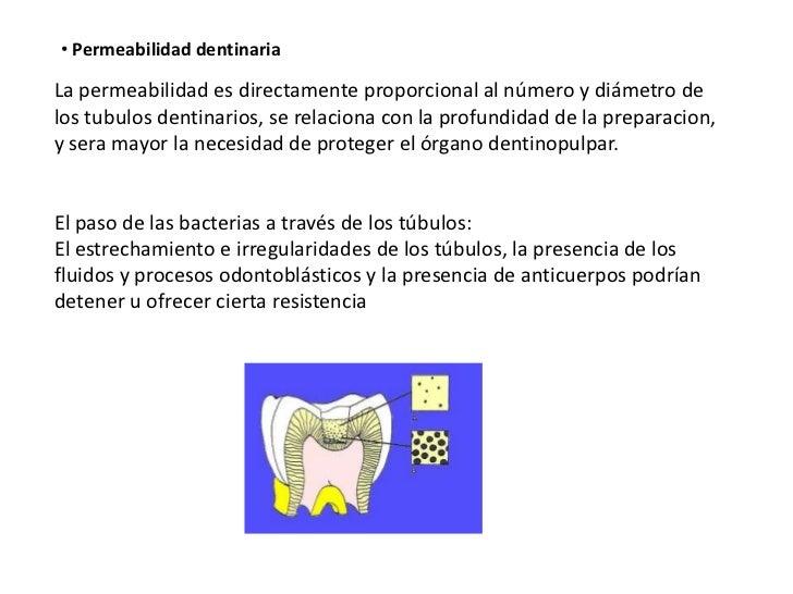 • Permeabilidad dentinariaLa permeabilidad es directamente proporcional al número y diámetro delos tubulos dentinarios, se...