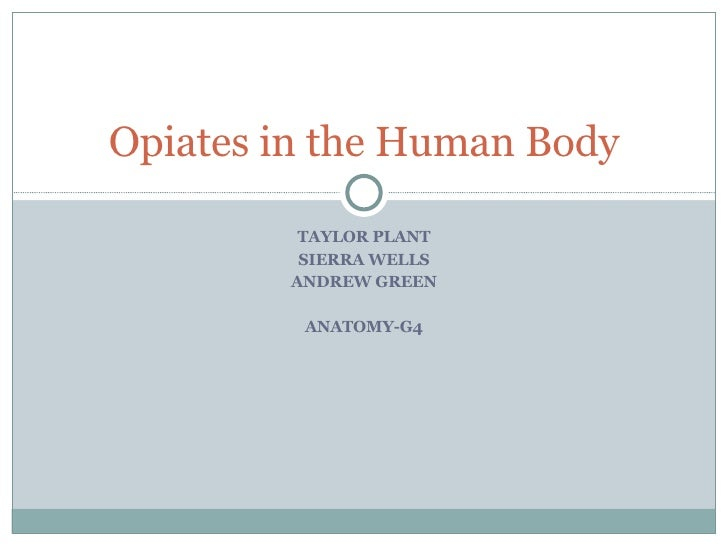 TAYLOR PLANT SIERRA WELLS ANDREW GREEN ANATOMY-G4 Opiates in the Human Body