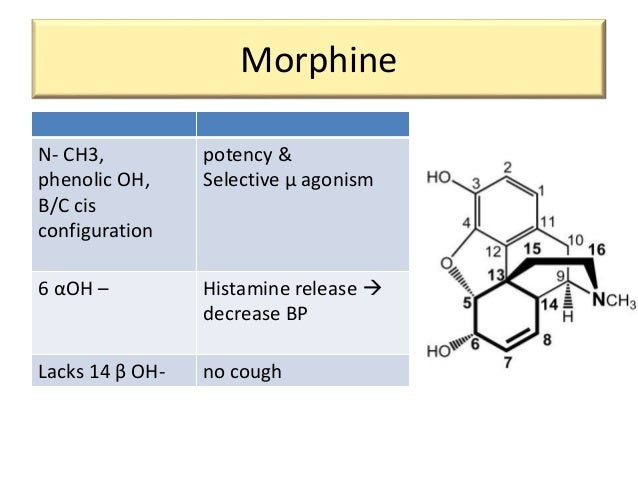 meloxicam structure activity relationship of morphine