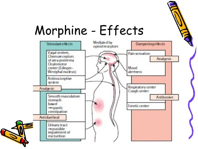 Experiment 2 analgesic action of morphine
