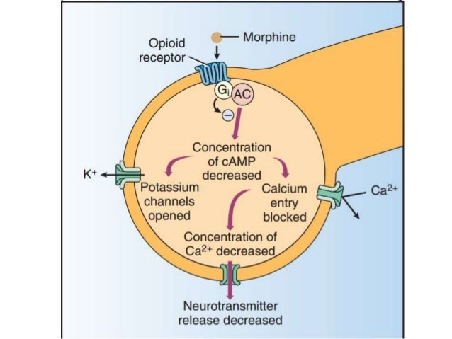 kappa agonists in management of pain and opioid addiction The rationale for putting opioid antagonists with an agonist is to improve pain   of a functional opioid kappa antagonist in the treatment of opioid dependence.
