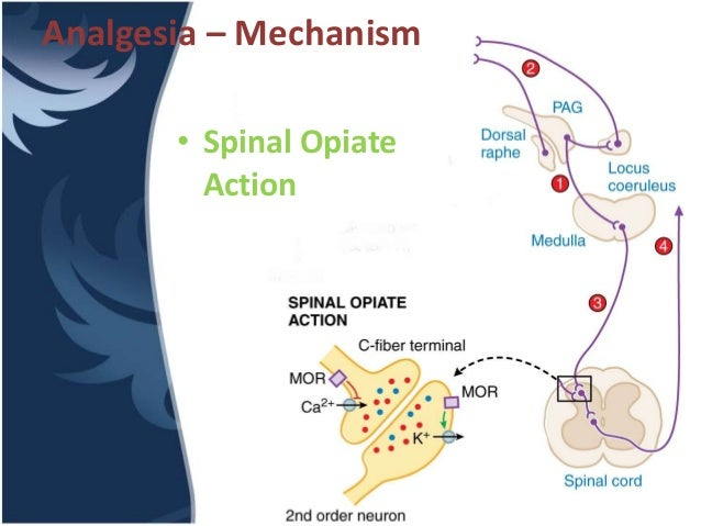 the mechanism of action of tramadol
