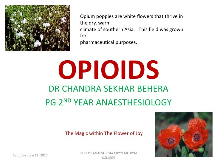Opium poppies are white flowers that thrive in the dry, warm   climate of southern Asia.   This field was grown for   phar...