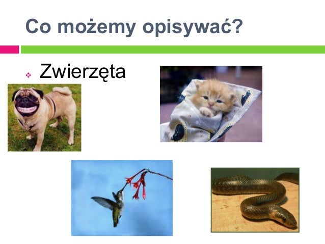 Co możemy opisywać?   Zwierzęta