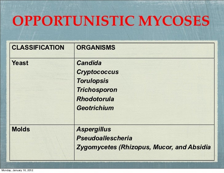 OPPORTUNISTIC MYCOSES       CLASSIFICATION      ORGANISMS       Yeast               Candida                           Cryp...