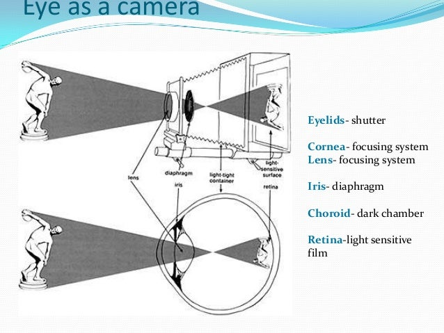 The eye and the camera worksheet kidz activities optics of human eye refractive errors ccuart Image collections