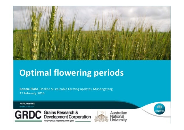 Optimal flowering periods Bonnie Flohr| Mallee Sustainable Farming updates, Manangatang 17 February 2016 AGRICULTURE