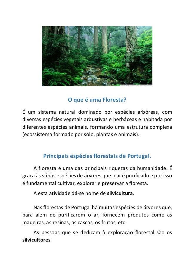 O que é uma Floresta? É um sistema natural dominado por espécies arbóreas, com diversas espécies vegetais arbustivas e her...