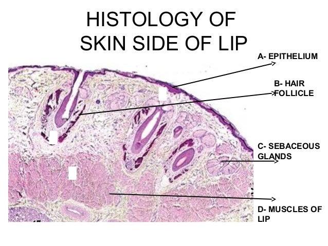 Oral Biologyslides