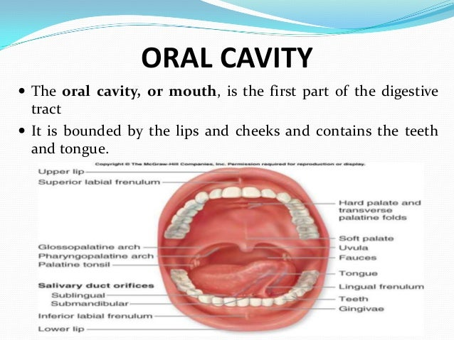 Oral cavity for Floor of mouth anatomy