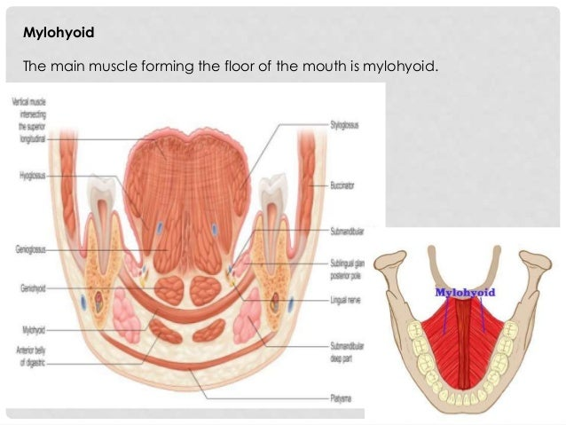 Oral Cavity Pharynx Radio Anatomy