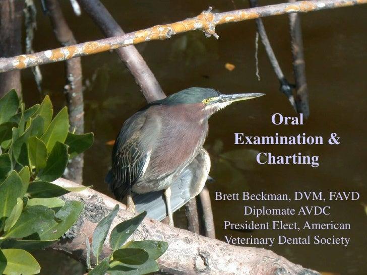 Oral Examination & Charting<br />Brett Beckman, DVM, FAVD<br />Diplomate AVDC<br />President Elect, American Veterinary De...