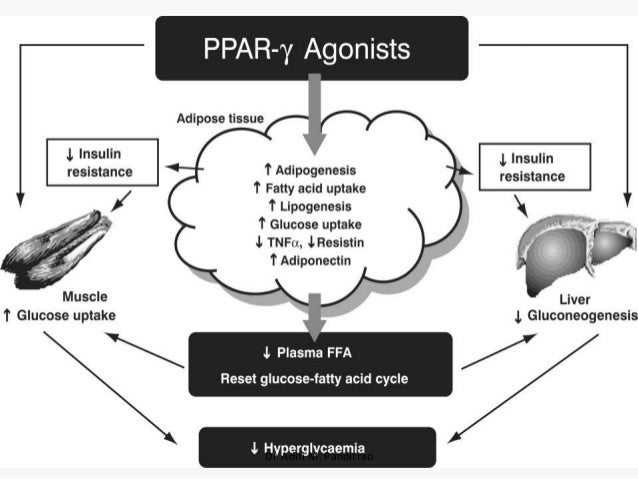 Oral hypoglycemic agents in diabetes