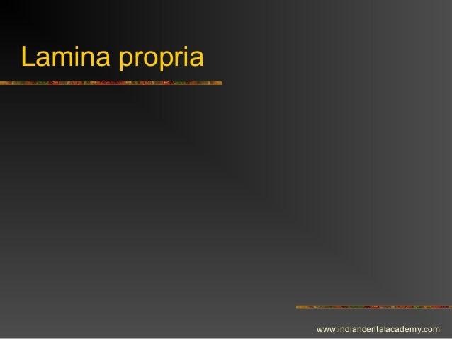 Lamina propria www.indiandentalacademy.com