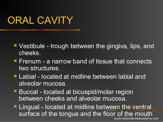 ORAL CAVITY  Vestibule - trough between the gingiva, lips, and cheeks.  Frenum - a narrow band of tissue that connects t...