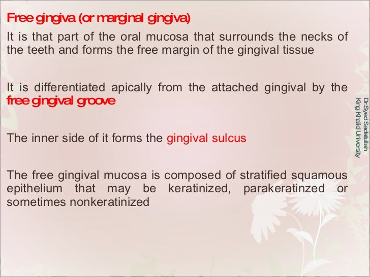 Free gingiva (or marginal gingiva) It is that part of the oral mucosa that surrounds the necks of the teeth and forms the ...