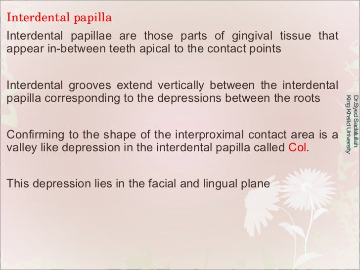 Interdental papilla Interdental papillae are those parts of gingival tissue that appear in-between teeth apical to the con...