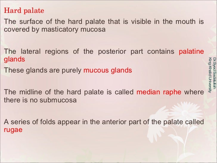 Hard palate The surface of the hard palate that is visible in the mouth is covered by masticatory mucosa The lateral regio...