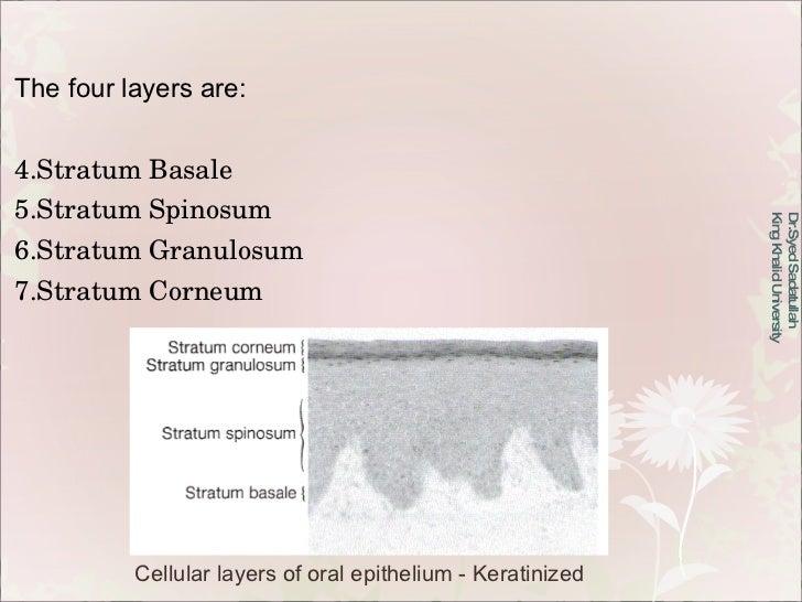 Dr.Syed Sadatullah  King Khalid University  <ul><li>The four layers are: </li></ul><ul><li>Stratum Basale </li></ul><ul><l...