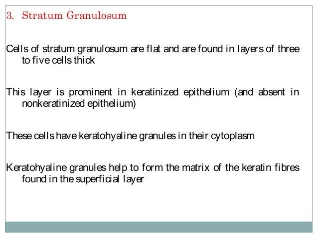 4. Stratum Corneum Cellsof stratum corneum areflat, devoid of nuclei and full of keratin filament surrounded by amatrix Th...