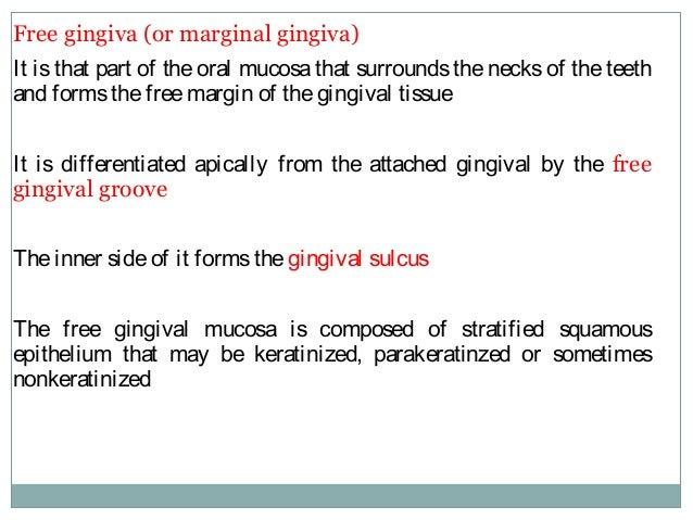Free gingiva