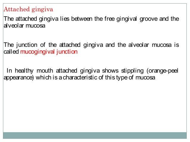 Histology of gingiva
