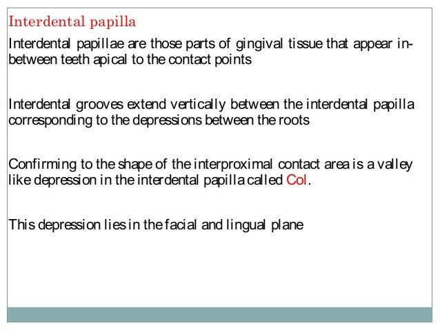 Interdental Papilla (arrow)
