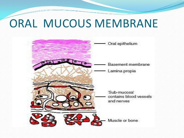 Cell Membrane Parts Diagram Not Lossing Wiring Diagram