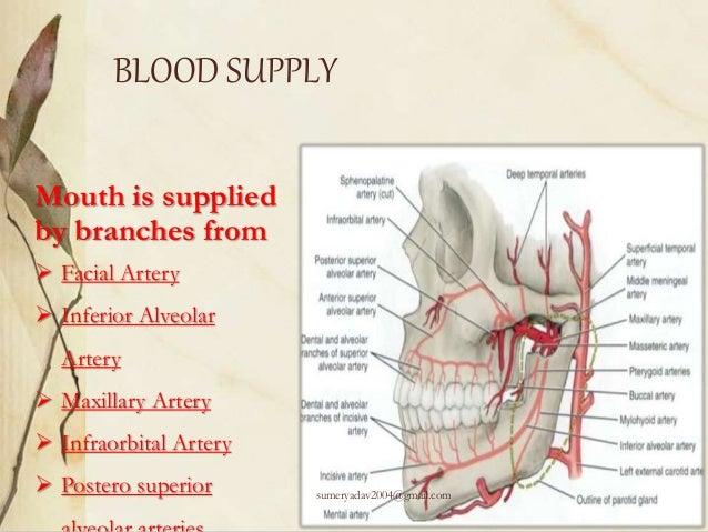 Oral Precancerous Lesions And Anatomy Of Oral Cavity