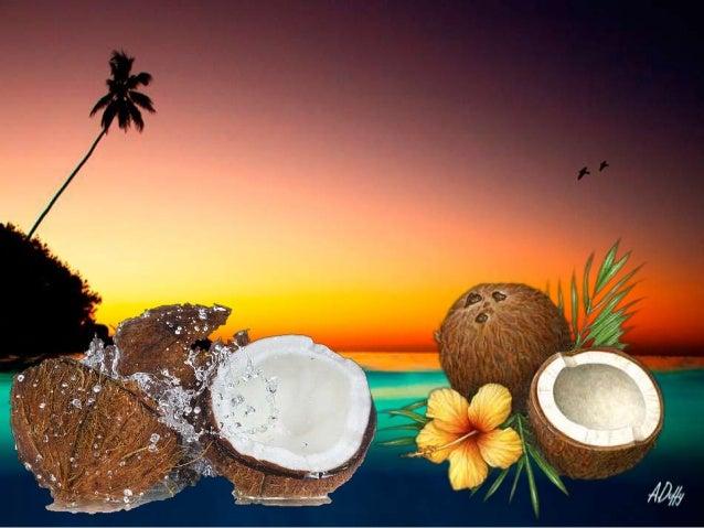 Hina et la légende du cocotier