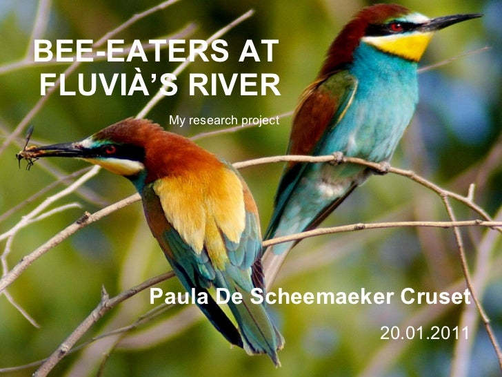 BEE-EATERS AT  FLUVIÀ'S RIVER Paula De Scheemaeker Cruset 20.01.2011 My research project