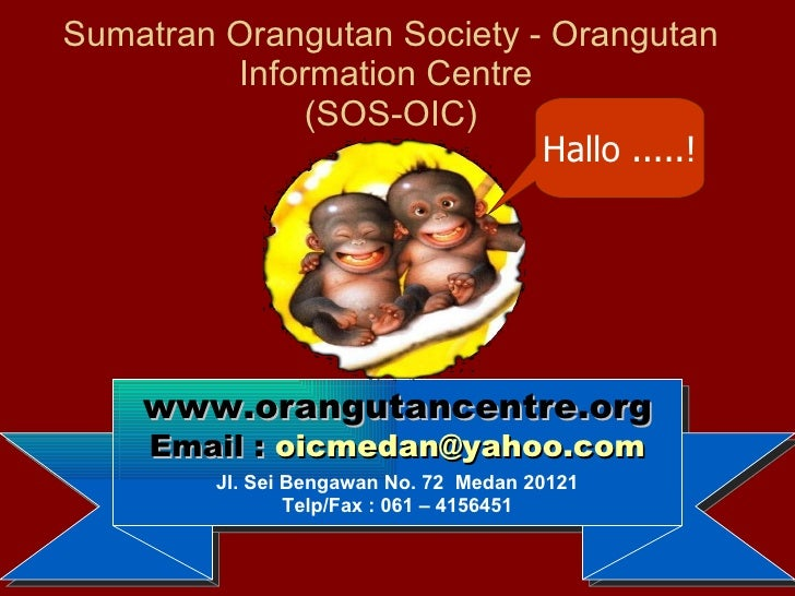 Sumatran Orangutan Society - Orangutan Information Centre  (SOS-OIC) www.orangutancentre.org Email :  [email_address] Jl. ...