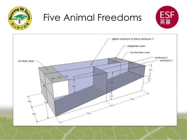 Diagram of an animal enclosure application wiring diagram orangutan enclosure outline rh slideshare net animal cell diagram worksheet plant diagram ccuart Choice Image