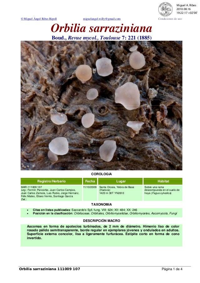 © Miguel Ángel Ribes Ripoll miguelangel.willy@gmail.com Condiciones de uso Orbilia sarraziniana Boud., Revue mycol., Toulo...