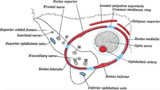 Image Gallery Lacrimal Artery